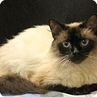 Adopt A Pet :: Coco - Seminole, FL