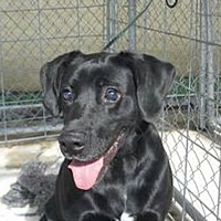 Adopt A Pet :: Blackie Boy - Jamestown, TN