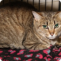 Adopt A Pet :: Lola (Spayed) - Marietta, OH