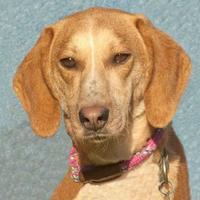 Adopt A Pet :: Johnny - Glen Allen, VA
