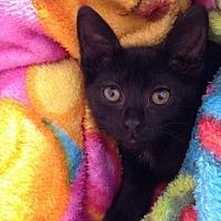 Adopt A Pet :: Dallas - Mobile, AL