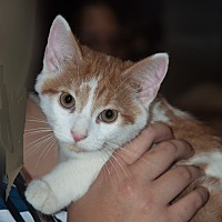 Adopt A Pet :: Riki - New Martinsville, WV
