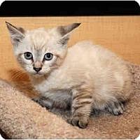 Adopt A Pet :: Thunder - Farmingdale, NY