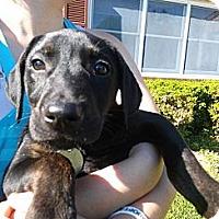Adopt A Pet :: Nike - South Jersey, NJ