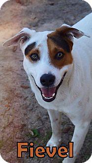 Hound (Unknown Type)/Retriever (Unknown Type) Mix Dog for adoption in Groveland, Florida - Fievel