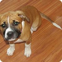 Adopt A Pet :: Xena - Franklin, VA
