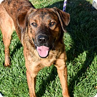 Adopt A Pet :: Rugby - Meridian, ID