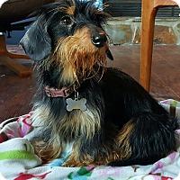 Adopt A Pet :: Griffin - Decatur, GA