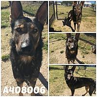 Adopt A Pet :: NEMO - SAN ANTONIO, TX