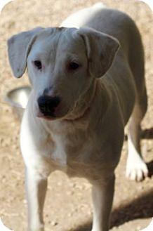 Hound (Unknown Type) Mix Dog for adoption in Von Ormy, Texas - Jazz