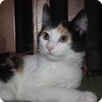 Adopt A Pet :: Arizona (LE) - Little Falls, NJ