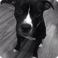 Adopt A Pet :: Lucy - Wichita, KS