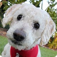 Adopt A Pet :: Gus - La Costa, CA