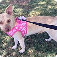 Adopt A Pet :: Becca - Snyder, TX