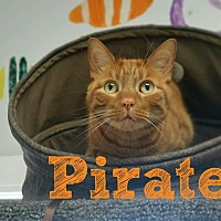 Adopt A Pet :: Pirate - Bloomingdale, NJ