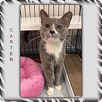 Adopt A Pet :: Carter - Atco, NJ