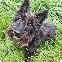 Adopt A Pet :: ROSIE - Newport, OR