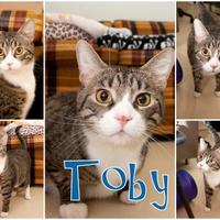 Adopt A Pet :: Toby - Munster, IN
