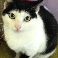 Adopt A Pet :: CiCi - Valley Falls, KS