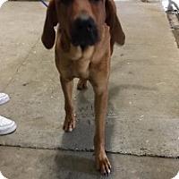 Adopt A Pet :: 6910 - Calhoun, GA