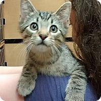 Adopt A Pet :: Edgar Allen Poe - Rochester, MN