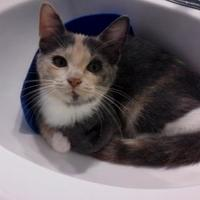 Adopt A Pet :: Jingle - Kinston, NC
