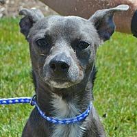 Adopt A Pet :: Willie - Mt. Prospect, IL