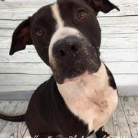 Adopt A Pet :: Max - Land O'Lakes, FL