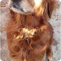 Adopt A Pet :: Emma - Fort Hunter, NY