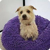 Adopt A Pet :: LENNY - Salt Lake City, UT