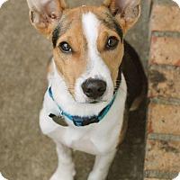 Adopt A Pet :: Sonny - Marietta, GA