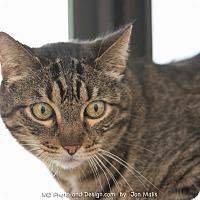 Adopt A Pet :: Spike - Fountain Hills, AZ