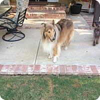Adopt A Pet :: Freddie - Riverside, CA