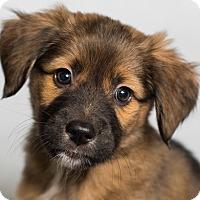 Adopt A Pet :: Roslyn - Minneapolis, MN