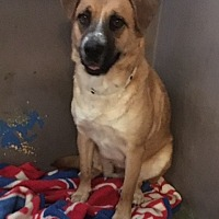 Adopt A Pet :: Maple - Los Angeles, CA