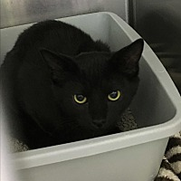 Adopt A Pet :: Donatello - Richboro, PA