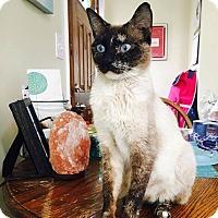Adopt A Pet :: Kismet - Chicago, IL