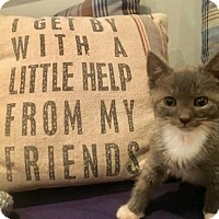 Adopt A Pet :: Justin - Westwood, NJ