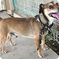Adopt A Pet :: Rudy - Pilot Point, TX