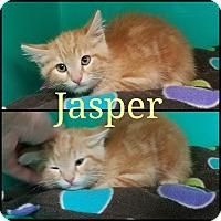 Adopt A Pet :: Jasper & Cutie - California City, CA