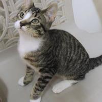 Adopt A Pet :: Doodle - Westville, IN