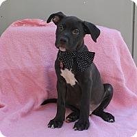 Adopt A Pet :: Hubble - Los Angeles, CA