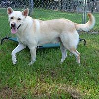 Adopt A Pet :: Carter - Manning, SC