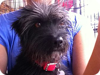 Terrier (Unknown Type, Medium) Mix Dog for adoption in North Hollywood, California - Dimitria