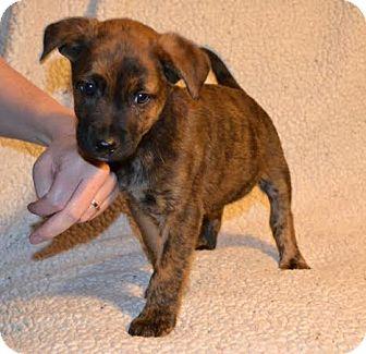 Terrier (Unknown Type, Medium) Mix Puppy for adoption in Okotoks, Alberta - Rio