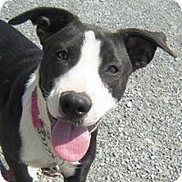 Adopt A Pet :: Ariel - YERINGTON, NV