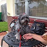 Adopt A Pet :: Nicky - Davie, FL
