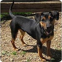 Adopt A Pet :: Jay Jay - Afton, TN