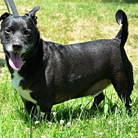 Adopt A Pet :: Zeek - DuQuoin, IL