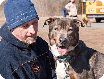 Shepherd (Unknown Type) Mix Dog for adoption in Midlothian, Virginia - Smokey